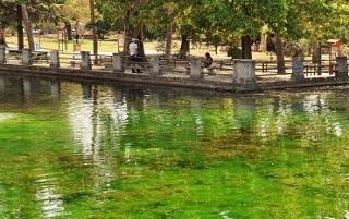 Futuromolise venafro laghetto di ciaraffella pieno di for Laghetto alghe