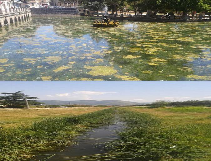 Futuromolise venafro il laghetto di corso lucenteforte for Alghe laghetto